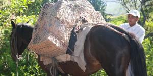 Manna packs being delivered by horse